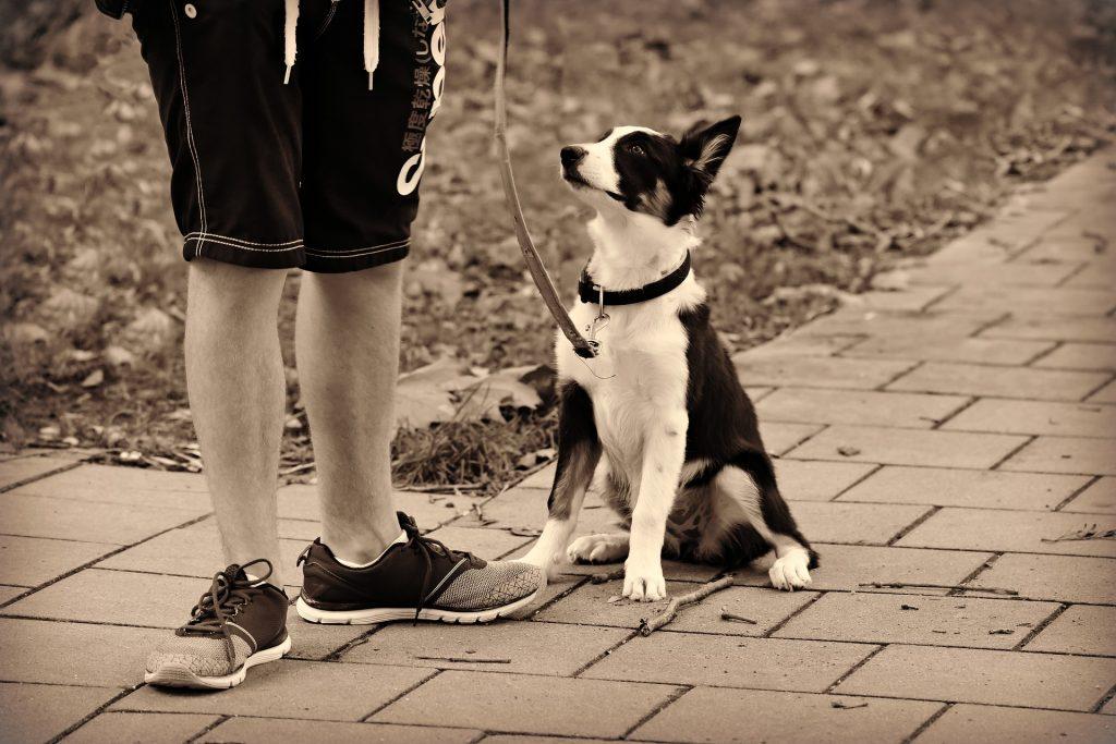 איך מתאימים - רצועה ורתמה לכלב
